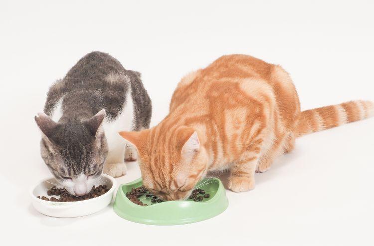 いつまでもずっと一緒に! ネコちゃんの健康づくりに欠かせない栄養のこと