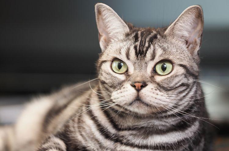 猫の名前ランキング2020発表!ムギちゃんがランクアップで首位獲得!