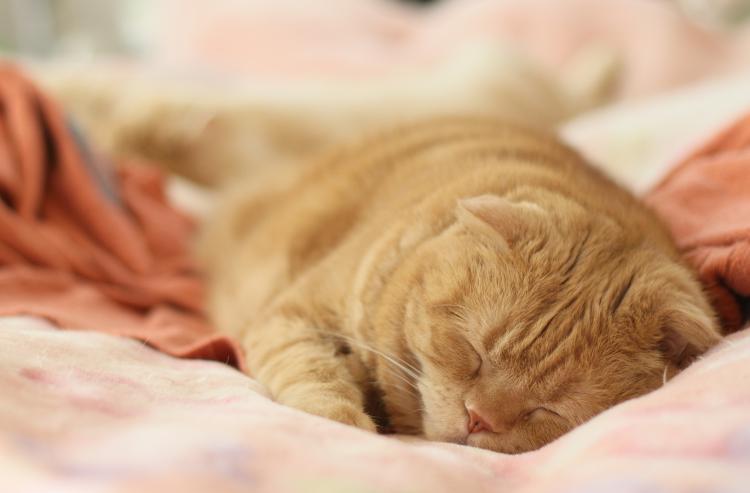 ネコちゃんは人間よりも歳をとるのが早いの?年齢に合わせたフードも知りたい!